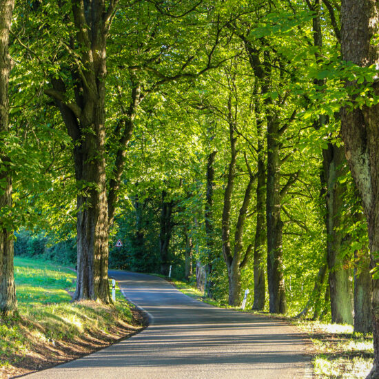Straße im Thüringer Wald - VIP Tourenfahrer